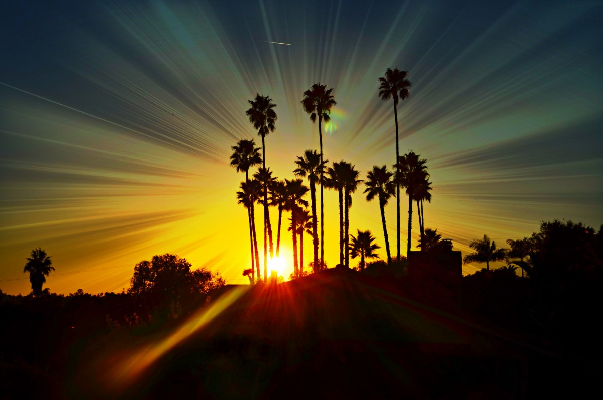 "Art4TheGlryOfGod, ""Palm Tree Sunset Glow"", Creative Commons by-nd"